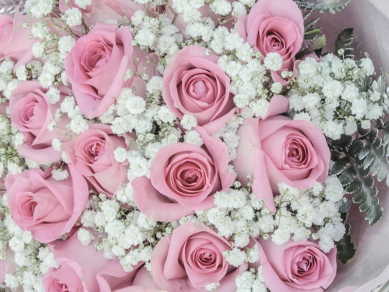 pink-roses-baby-breath-flowers-bali